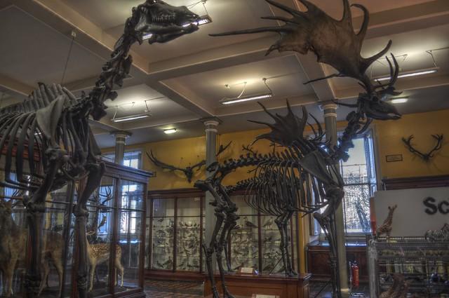 Natural History Museum Dublin Jobs