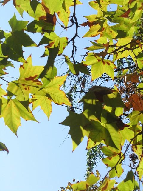 Otra foto de hojas
