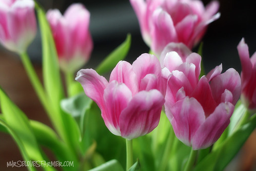 Spring Tulips 2012