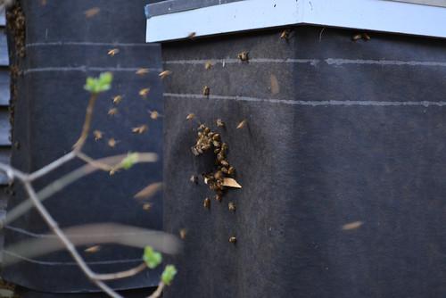 bees awakening