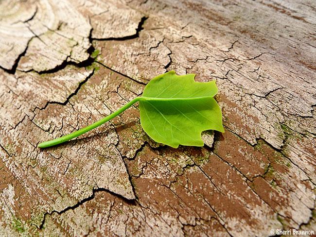 Baby green leaf