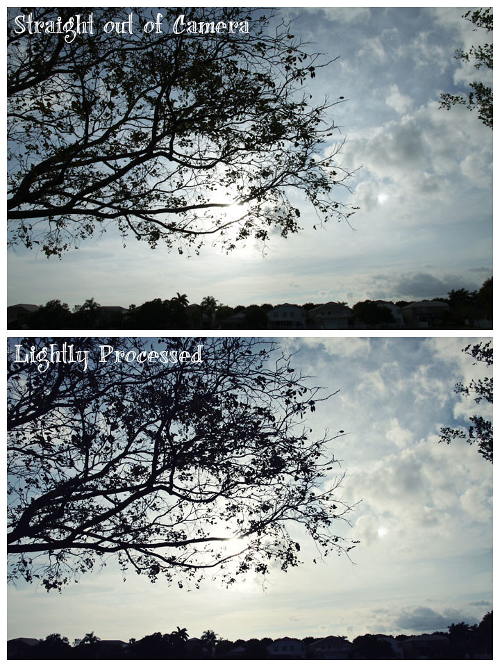 new lens tree silhouette before&after