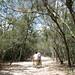 Bicycle Ride through Coba Ruins - Yucatan, Mexico