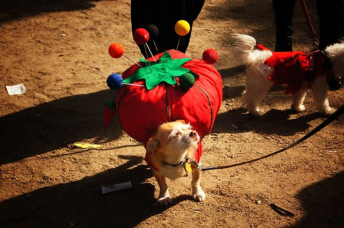 Pin Cushion, Halloween Dog Parade 2011, Tompkins Square Park, East Village, New York City