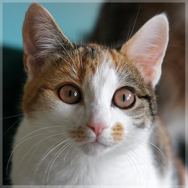 Cat or marsupial?