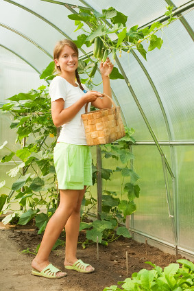 school greenhouse programs
