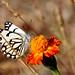 November butterfly by Samane Kandi