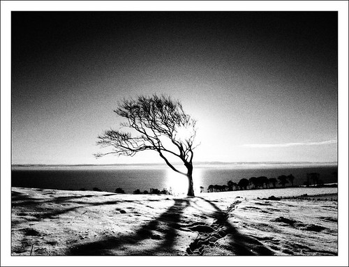 Sun, Snow and Tree by ccgd
