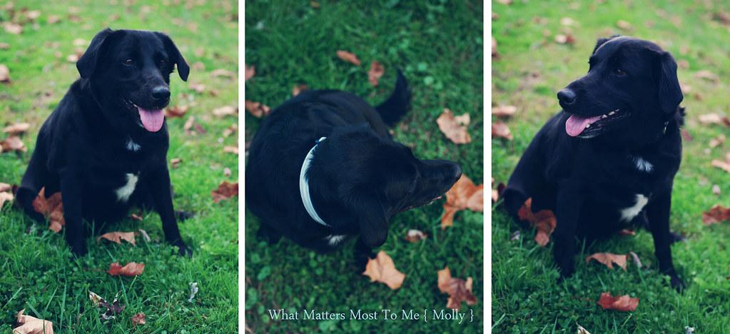 Molly 01 Blog