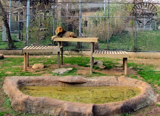 Lion's Yard