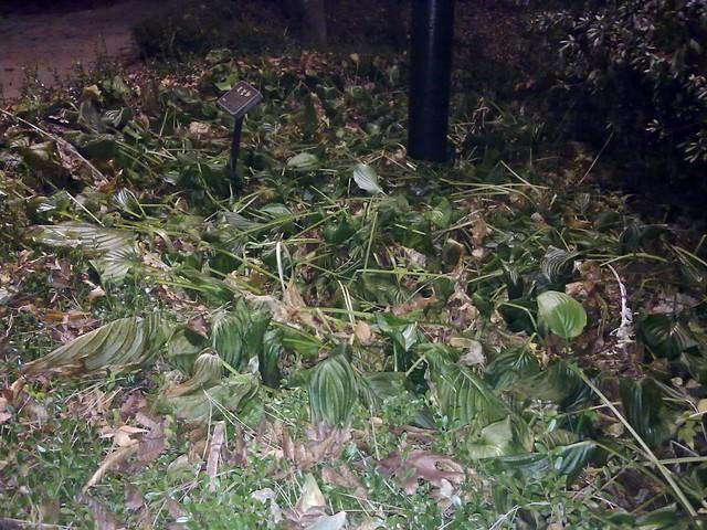 기온 급강하로 인한 식물의 초토화 Plants that affect from weird weather