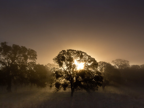 california trees mist fog sunrise landscape oak merced sierra catheysvalley highway140 cloudsstormssunsetssunrises
