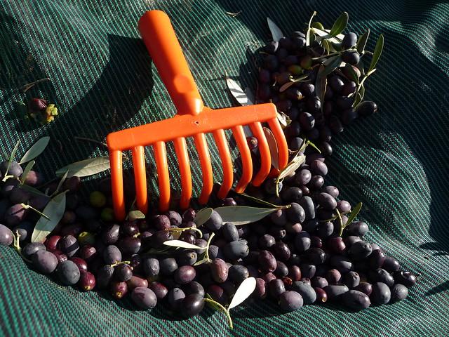 Bright orange olive comb