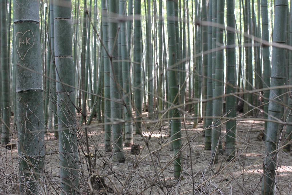 Arashiyama, Bambuswälder-29
