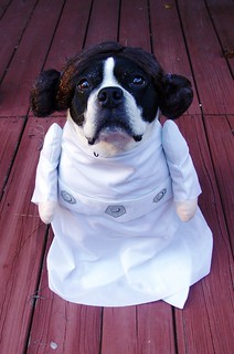 Virginia as Princess Leia Halloween 2011