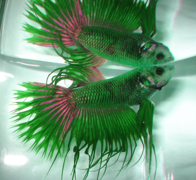 bright green fish ideas? - the planted tank forum, Reel Combo