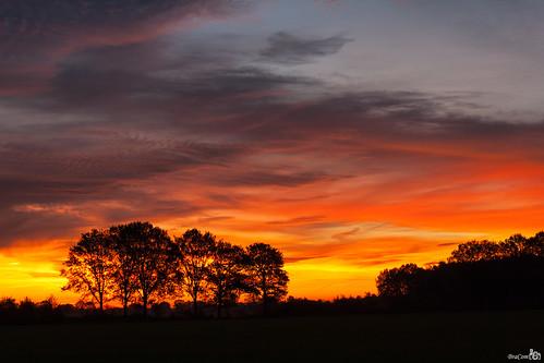 trees netherlands clouds sunrise fire bomen colorful nederland silhouettes wolken noordbrabant vuur wintelre zonsopkomst silhouetten kleurrijke bracom mygearandme mygearandmepremium mygearandmebronze mygearandmesilver mygearandmegold mygearandmeplatinum mygearandmediamond bramvanbroekhoven