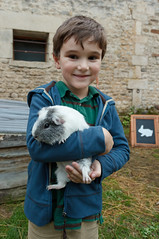 Levi and Pepper the Guinea Pig - Photo of Nécy