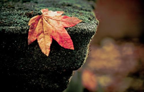 Leaf on Edge on the 3rd