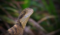Australian Reptile Centre