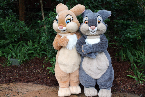 Meeting Thumper and Miss Bunny