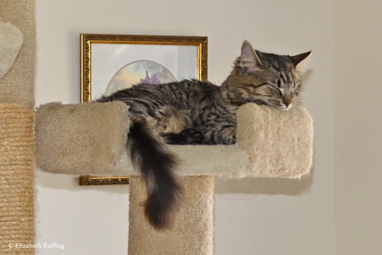 Josie and Bertie asleep in adjoining cat beds, by Elizabeth Ruffing
