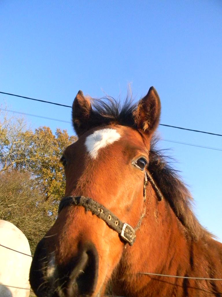 Friendly foal Buxted Circular