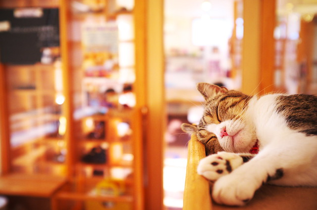 I'm only sleeping (at a cat cafe, Nara)