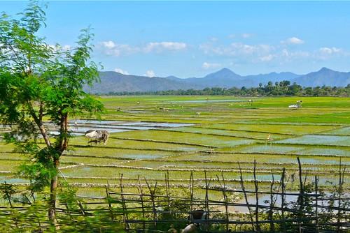 landscape asia rice paddy fields timor leste sawah easttimor dili pemandangan timorleste earthasia osttimor motaain