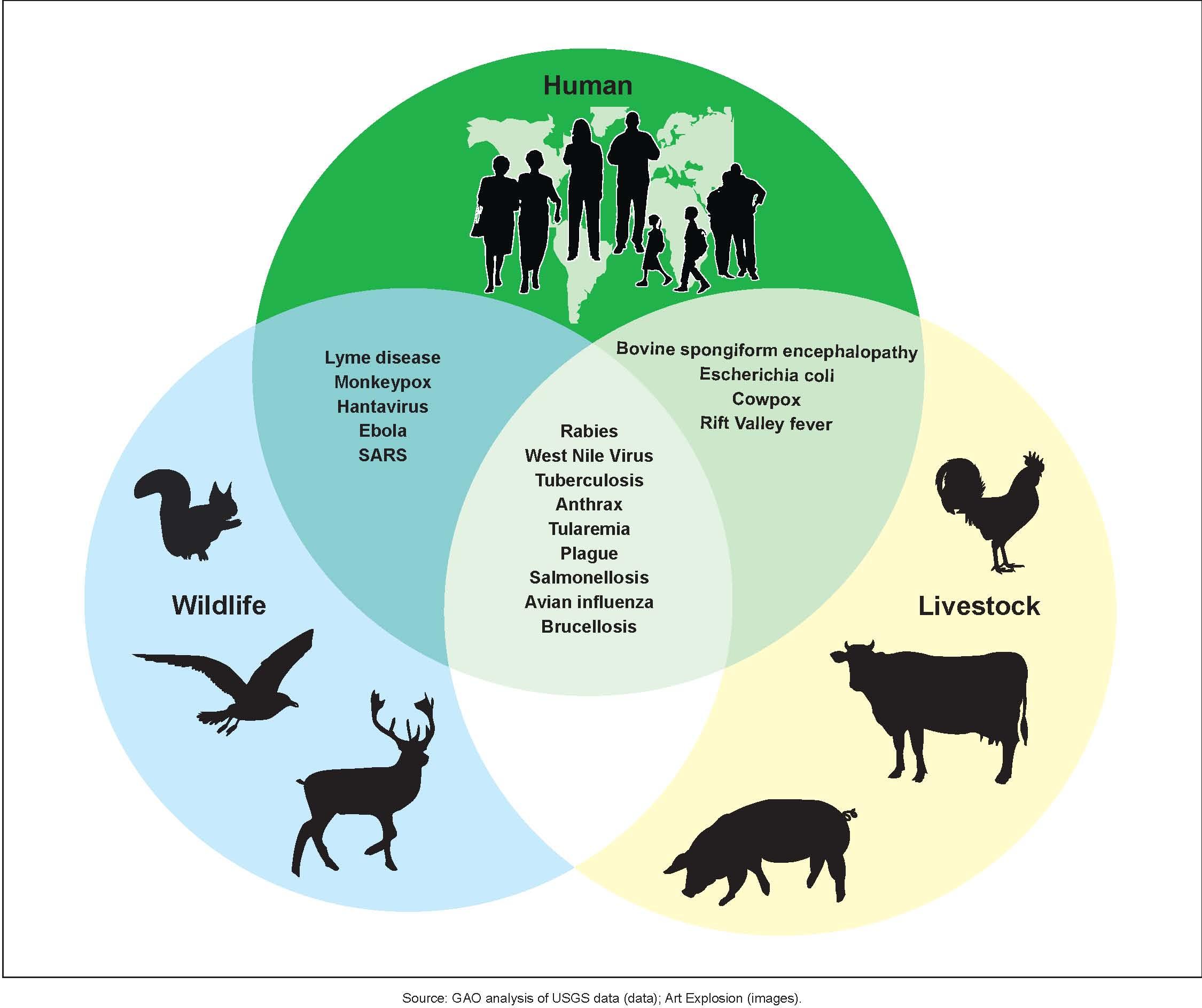 Zoonotic on Animal Life Cycle