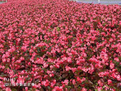 P1130314花海