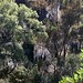 Río y arboles con epifitos - river and trees with epiphytes; al sur de Tlaxiaco, Oaxaca, Mexico por Lon&Queta