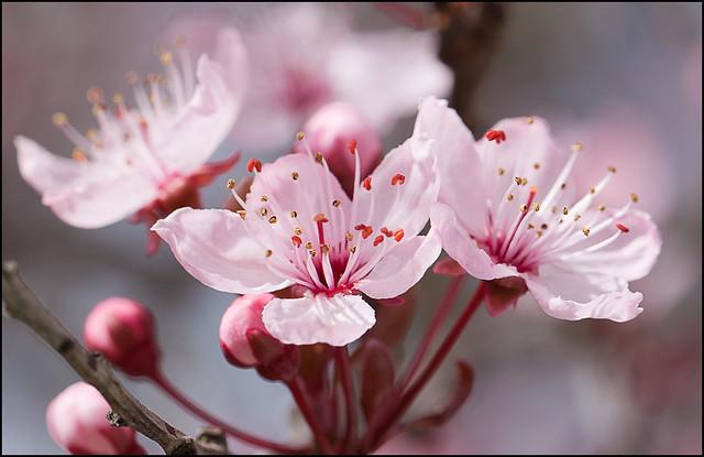 桜が咲いている: 春が来た
