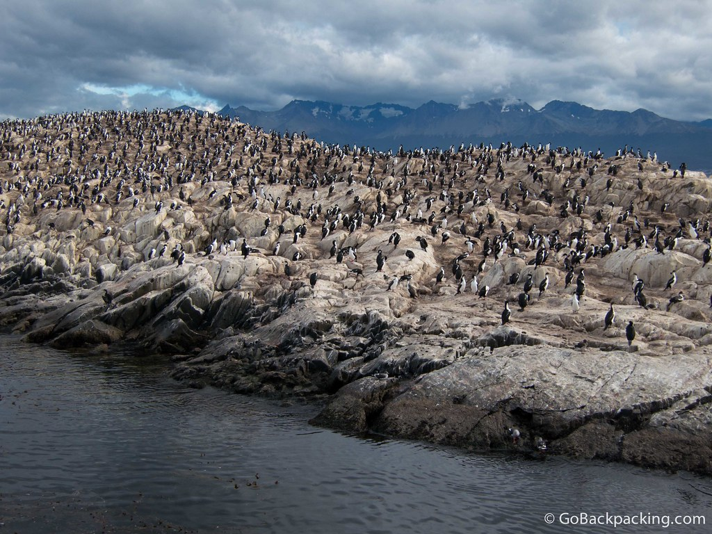 Cormorants in the Beagle Channel