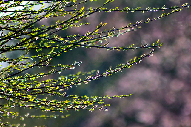 With Lovely Cherry Blossom Bokeh
