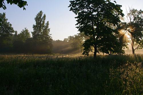 sun mist landscape evening estonia pentax eesti päike hommik udu k7 soomaa maastik heinamaa viljandimaa soomaanationalpark soomaarahvuspark pentaxk7 tipuküla