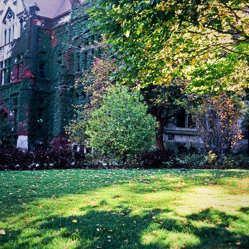 university shadows