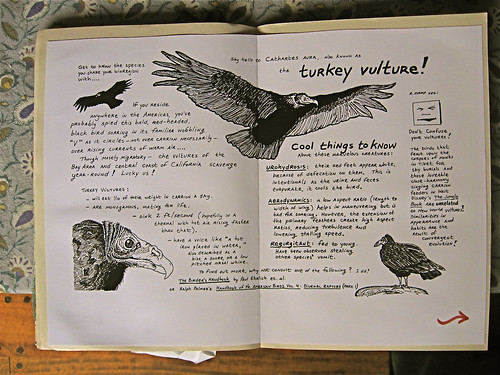 Turkey vulture, pages one and two