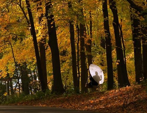 road park camera autumn trees ohio sun fall colors leaves woods shoot photographer cincinnati sharonwoods tamron70300 thechallengefactory