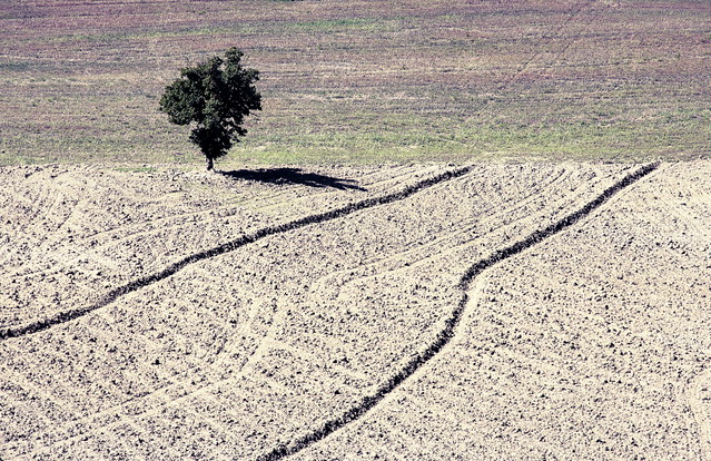 Landscape: alone tree in the border land