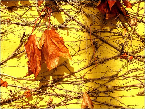 autunno sul muro - autumn on the wall