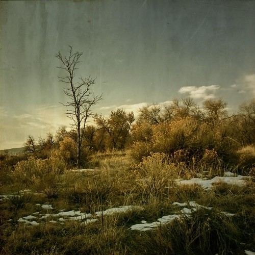 autumn trees light sky snow fall clouds forest canon vintage square colorado brush aged dried textured groundcover driedgrasses texturesquared t1i