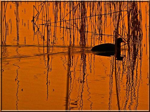 sunset color reflection nature water wasser sonnenuntergang natur spiegelung sunsetmood