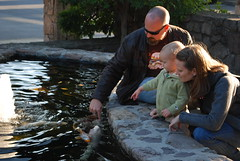 Feeding the Koi at Robert Sinskey Vineyard