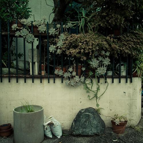 Succulent Rock Garden Fence