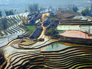 Sapa Rice Terraced Fields