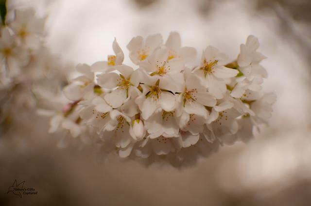 ~Soft White~